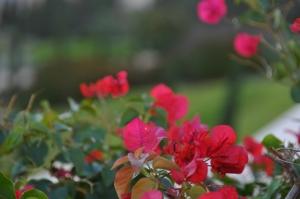 Flowers (640x425)